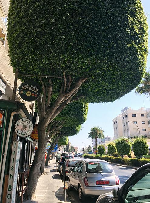 В городе много растительности и машин, а вот уличного бесплатного вайфая нет