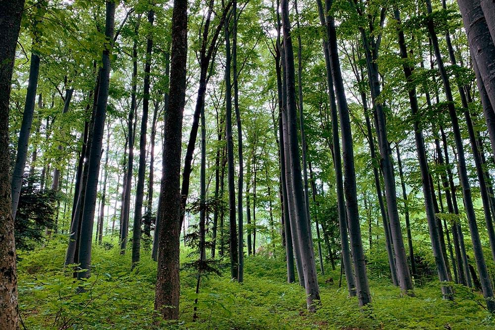 Природный парк «Хоэ-Ванд» вНижней Австрии