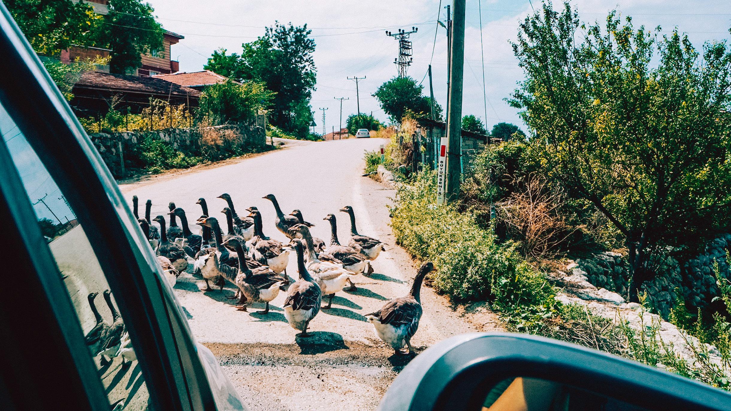 Как путешествовать на машине по черноморскому побережью Турции