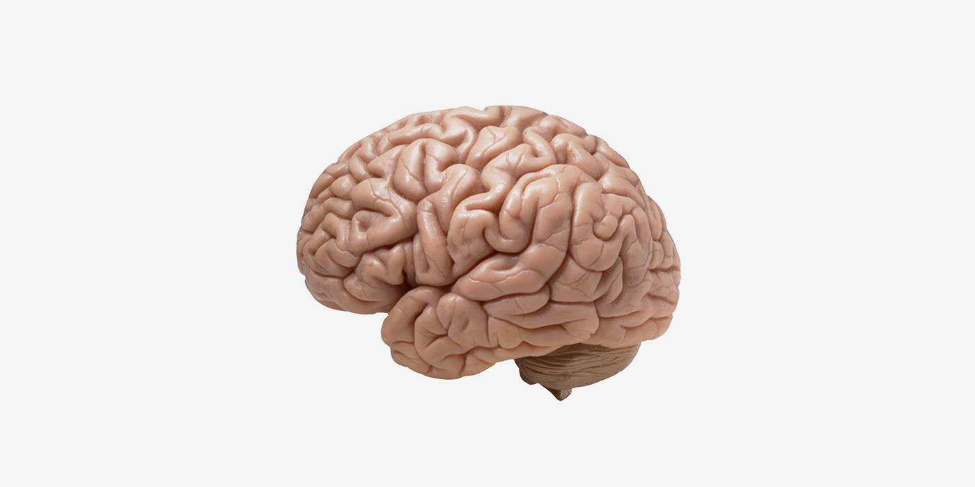 Ноотропы: правда ли они улучшают работу мозга