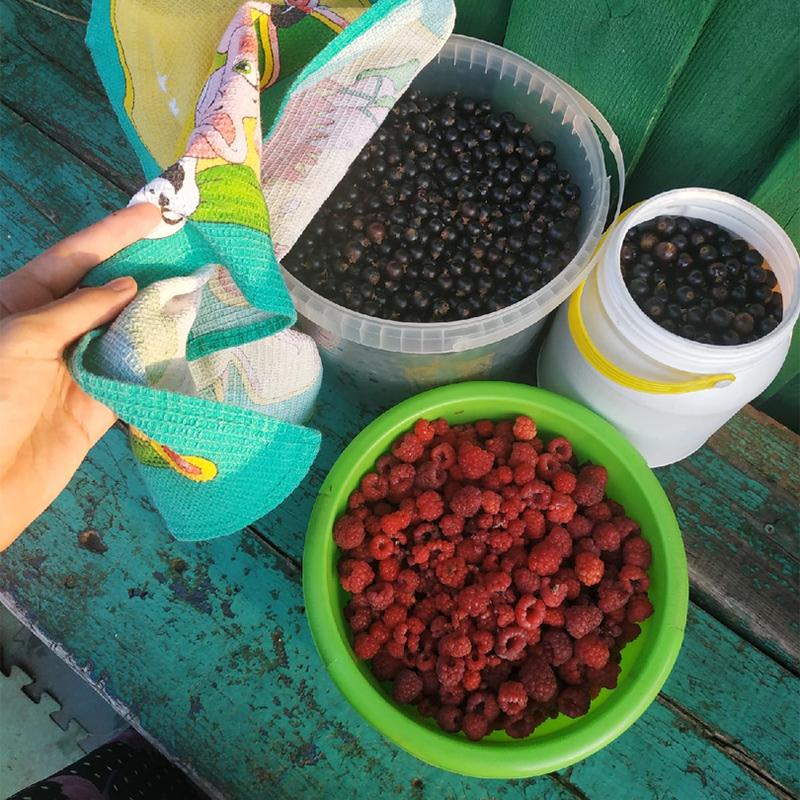 Урожай ягод. Кроме малины исмородины, выращиваем клубнику, крыжовник, черноплодку, жимолость, облепиху