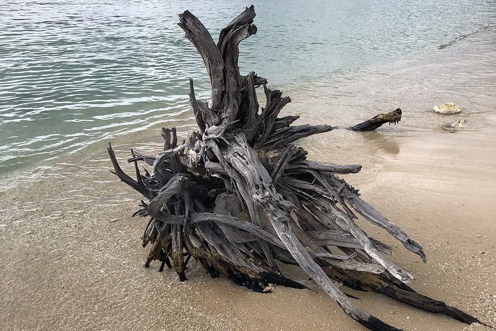Отполированные водой остатки дерева на пляже «Сент-Анн»
