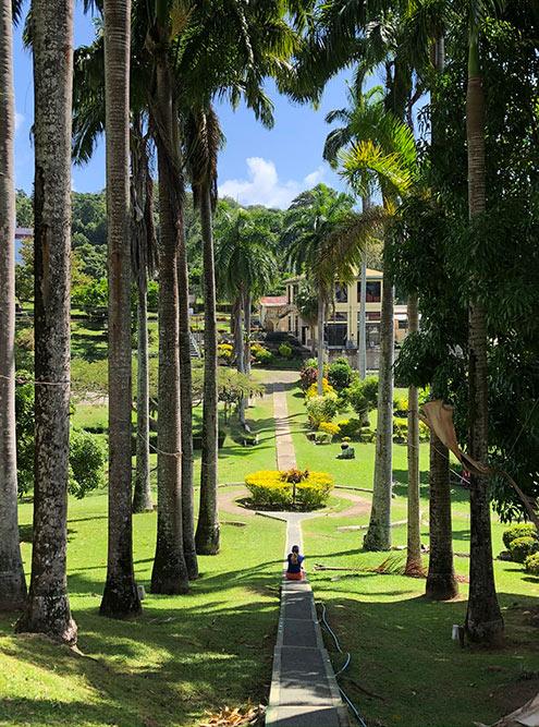 Ботанический сад на острове Тобаго. Каких-то необычных растений мы не встретили. Самое красивое, что было в саду, — вот эта фотогеничная дорожка