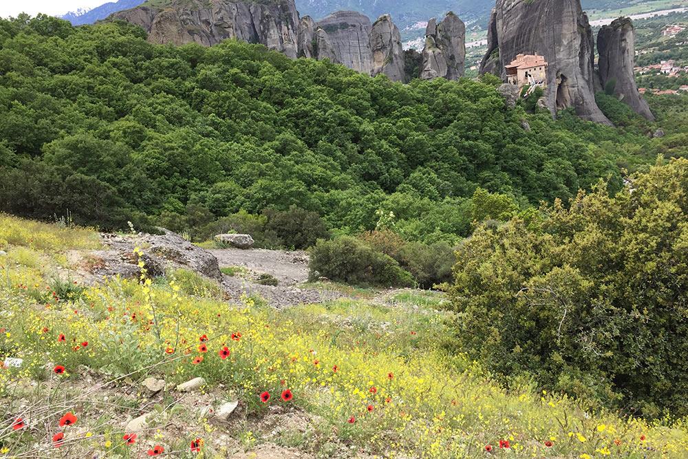 В мае в Метеорах много полевых цветов. Мне особенно понравились дикие маки