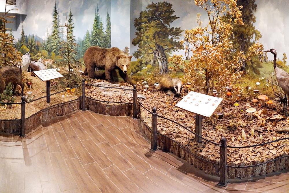 В музее естествознания находится порядка 300 экспонатов животных и птиц