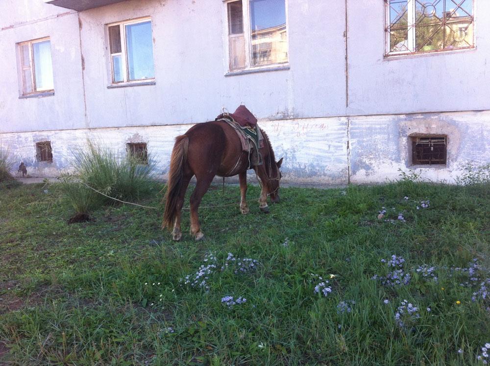 Летом в наш двор в Дархане каждое утро приезжает мужчина на лошади. Он продает парное молоко. С 8 утра начинает кричать под окнами: «Покупайте молоко!»