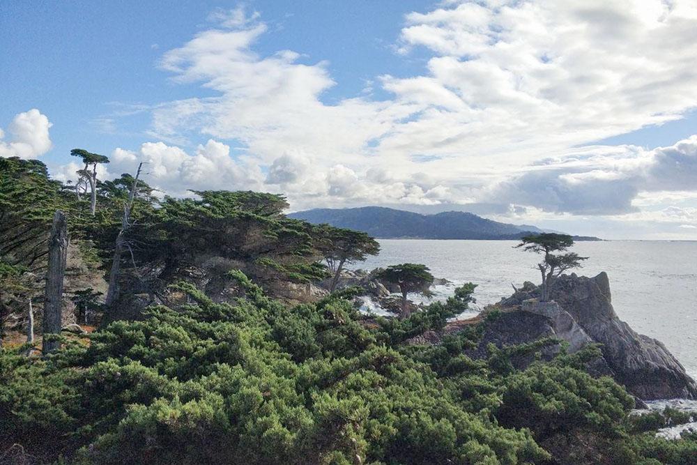 Одинокий кипарис на скале считают символом Калифорнии