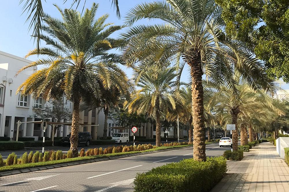 Так выглядят пальмовые аллеи и аккуратные белые домики в районе «Волна»
