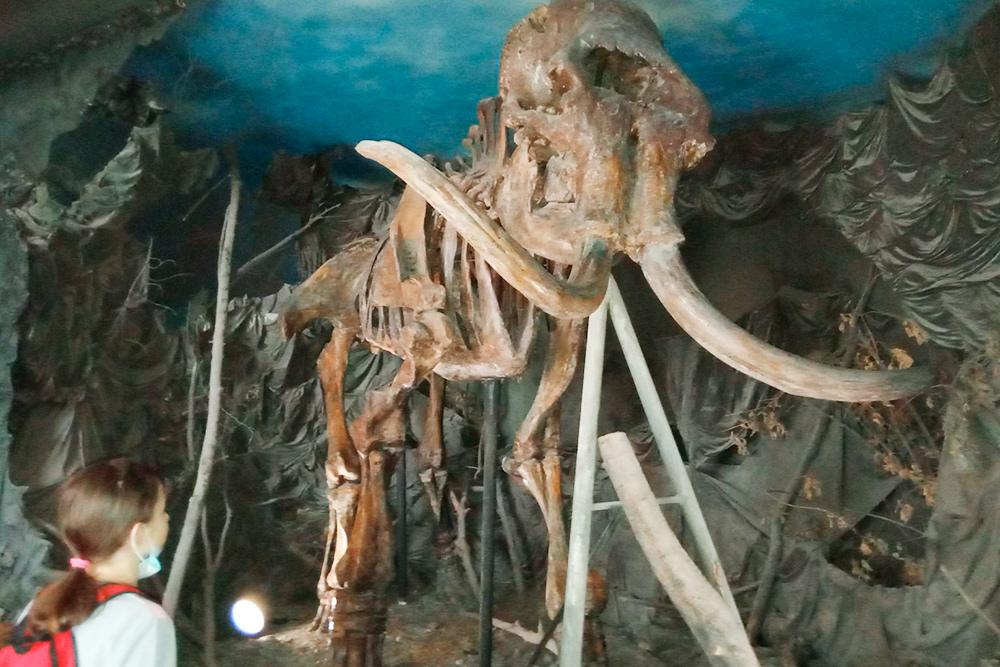 Рассказ об истории края в музее начинается со скелета мамонта и костей других древних животных: шерстистого носорога, пещерного льва