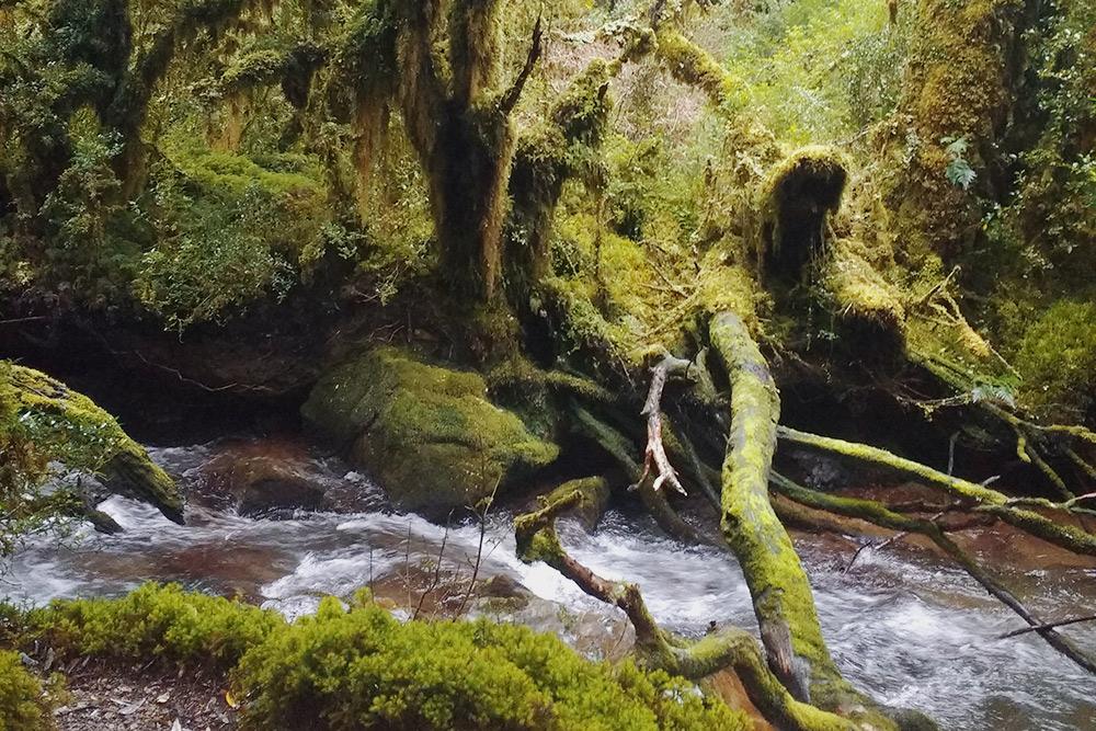 Так выглядит Боске-Энкантадо — Зачарованный лес