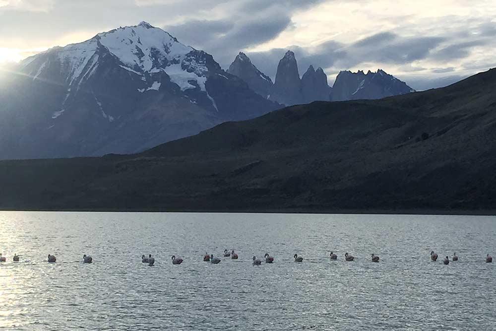 Фламинго рядом с национальным парком Торрес-дель-Пайне. Это озеро называется лагуна Амарга — «горькое озеро» — из-за агрессивного естественного состава воды с высоким содержанием хлорида, натрия и азота, что ограничивает рост фитопланктона