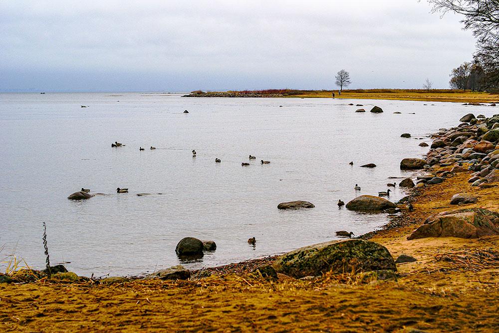 Берег Финского залива впарке Александрия. Ближе кНижнему парку берег каменистый, адальше песчаный, комфортный дляпикника