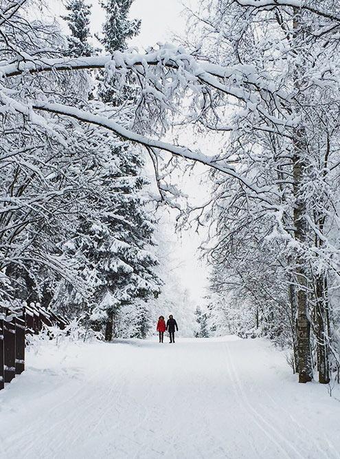 В 2020году Петрозаводск может только мечтать о такой снежной зиме: снега почти нет