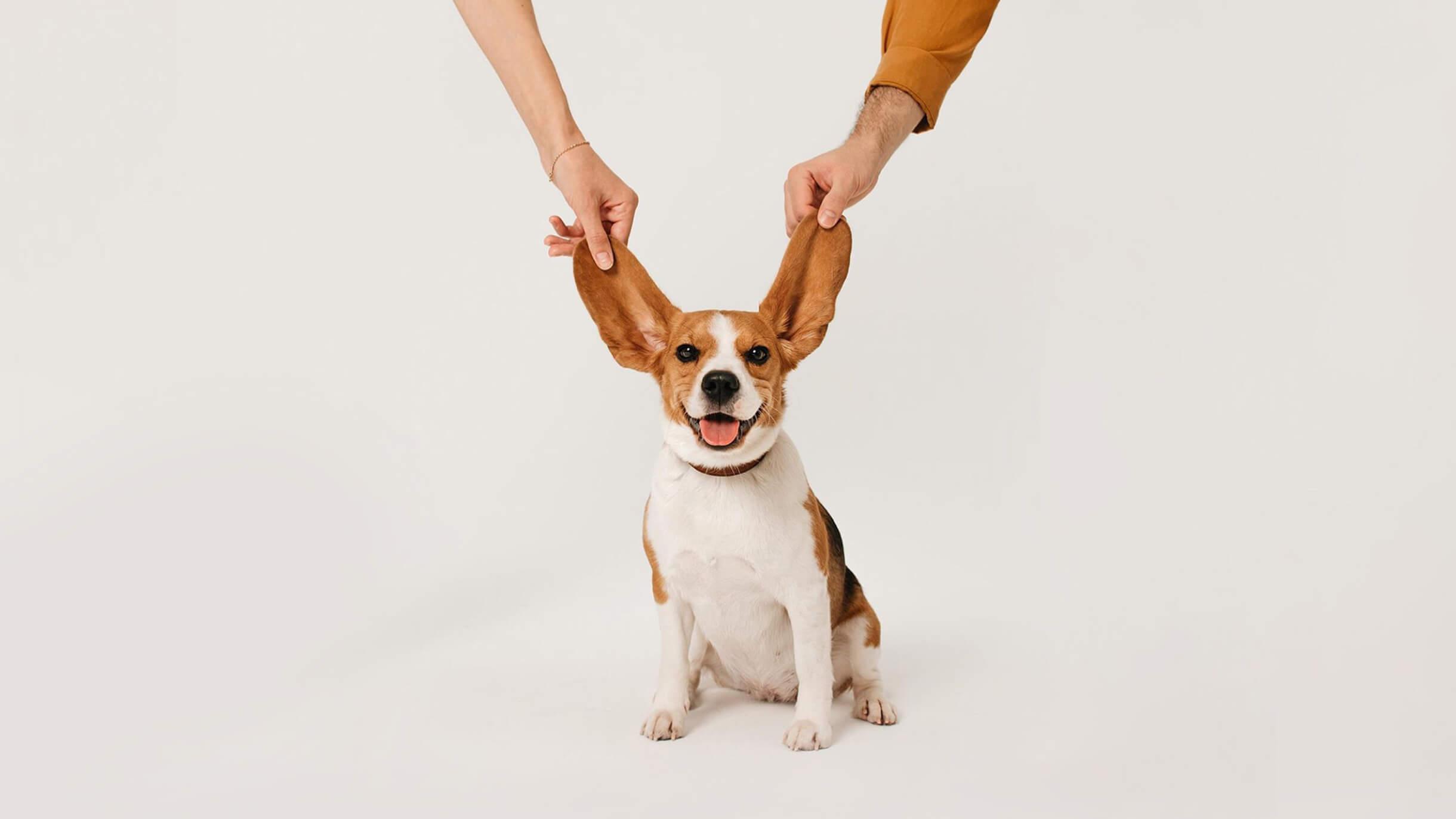 Драгоценные песики: 15 собак, которые живут у читателей Т—Ж