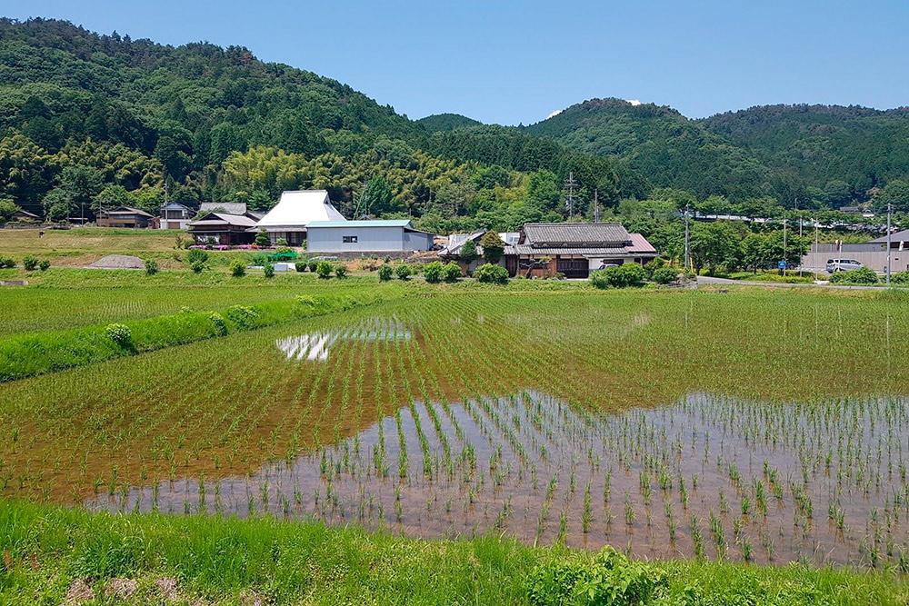 Рисовые поля вблизи паломнических синтоистских троп Кумано-кодо на полуострове Кии