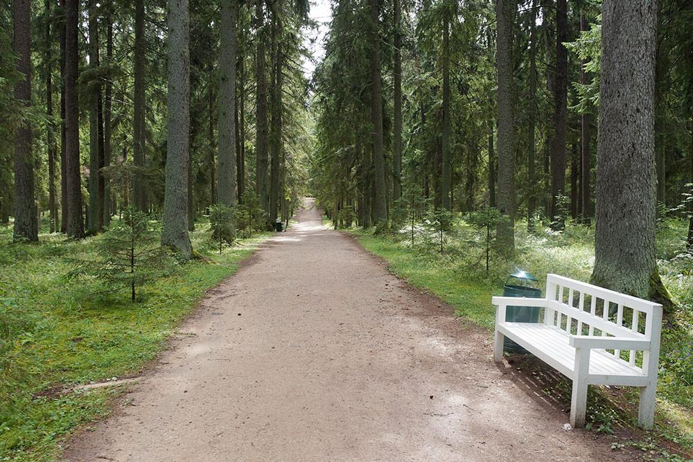 Это аллеи от дома к лесу. Есть аллея Анны Керн, но там всегда много экскурсионных групп