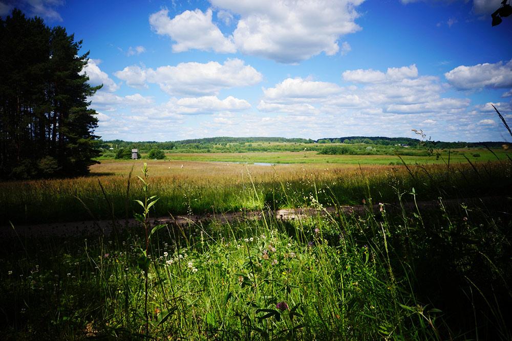 Вид на реку Сороть имельницу, если идти всторону Тригорского. Пахнет травами исолнцем, а влесу земляника илисички