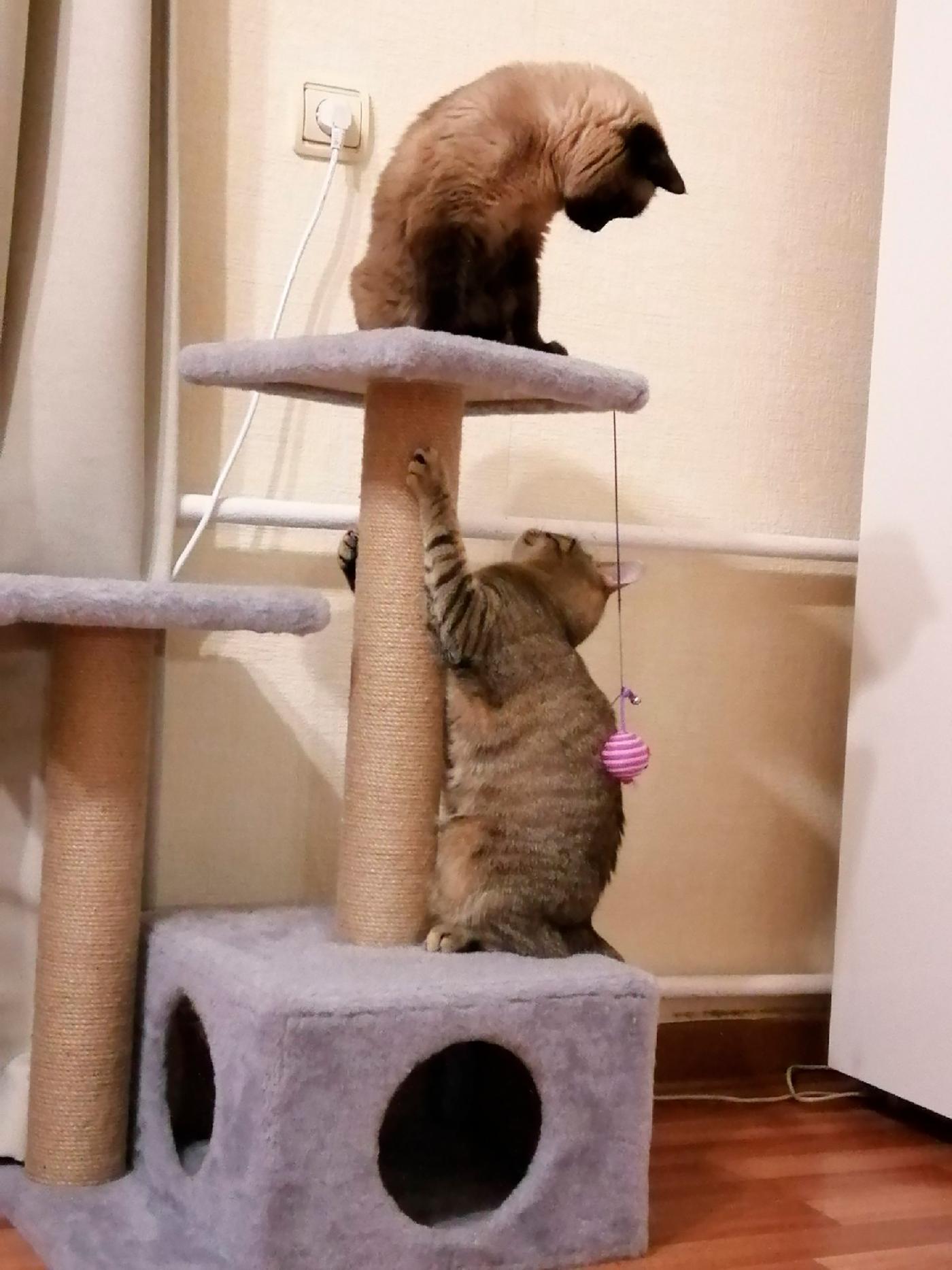 Наши кошки Тая (сверху) и Барса (снизу)