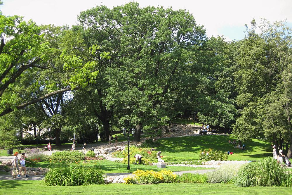 Летом в парк часто приходят с детьми. В отличие от Старого города, где кругом брусчатка, катить коляску здесь намного удобнее