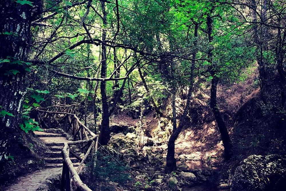 В парке приятно гулять под тенью деревьев стиракс, которые пропитали воздух ароматом ванили