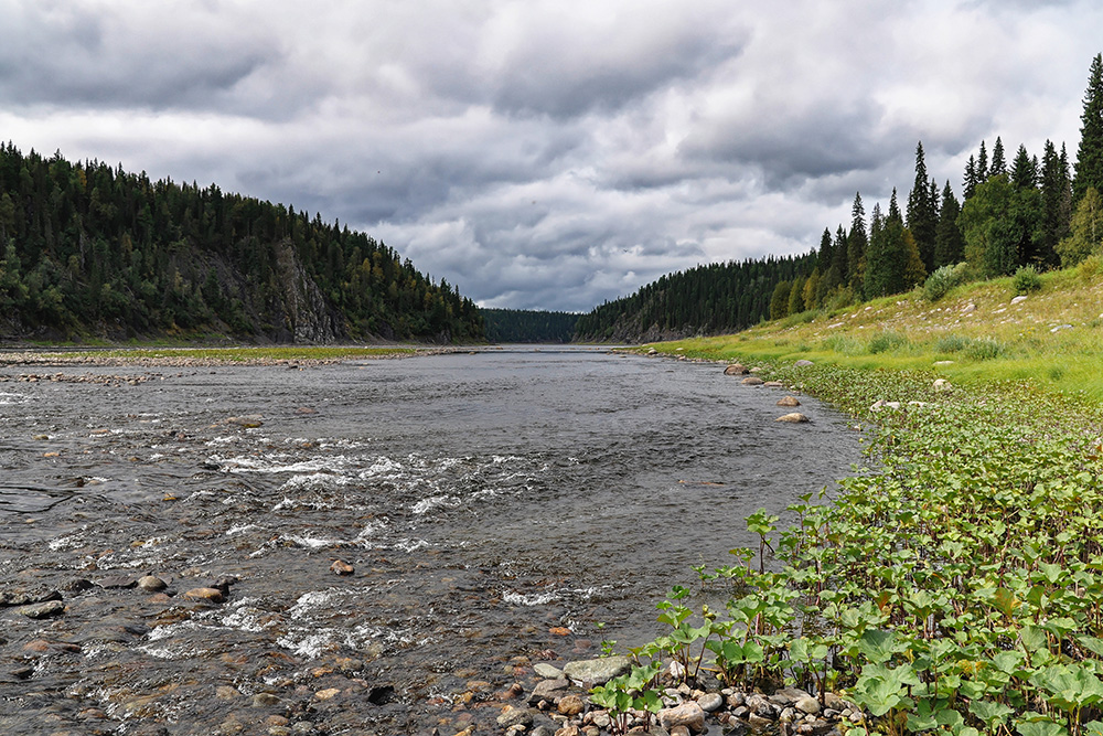Леса занимают более половины площади парка