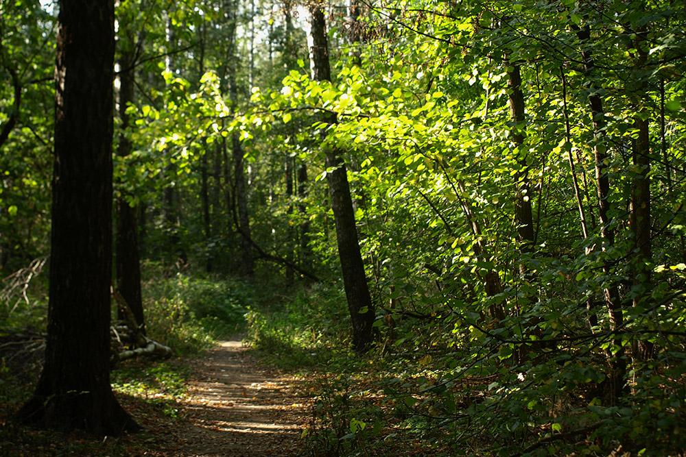 В лесу остерегайтесь клещей