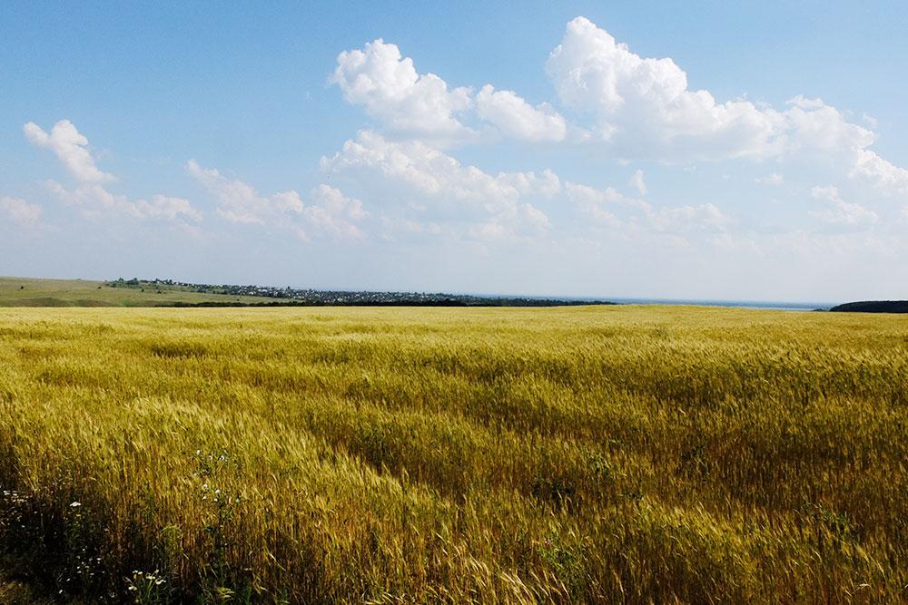 Красота в «Самарской Луке» кроется не только в горах и воде — поля тоже завораживают