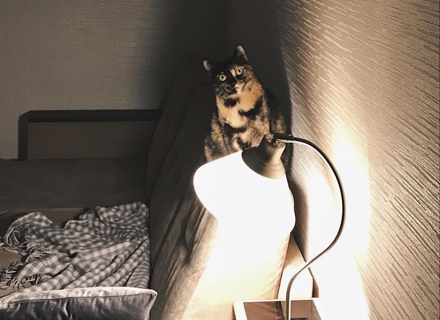 Это Ева, кошка редактора Вики. Она ждет ваших историй