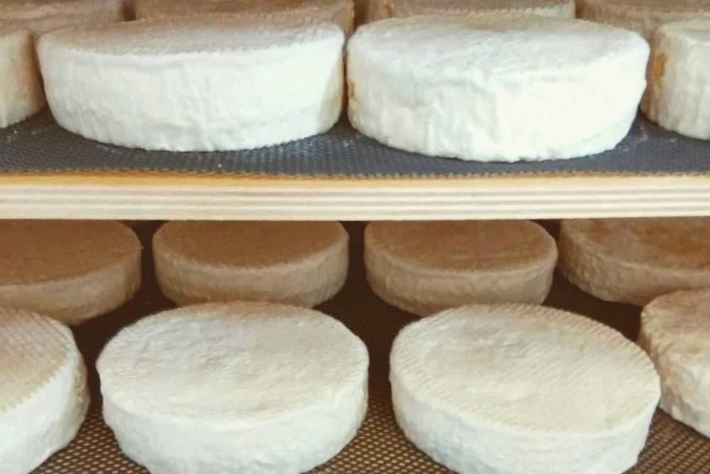 Первые партии сыра камамбер на производстве. Сейчас его уже не производят — это было в рамках экспериментов