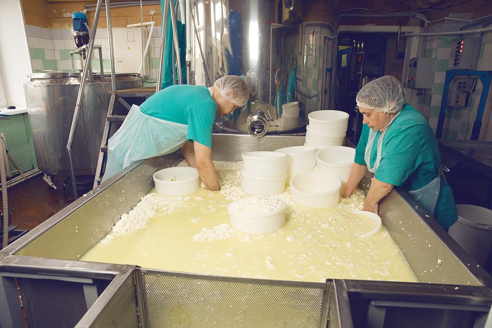 Сотрудники раскладывают сырное зерно по формам
