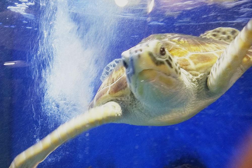 Пожалейте рыб и черепах: выключите вспышку!