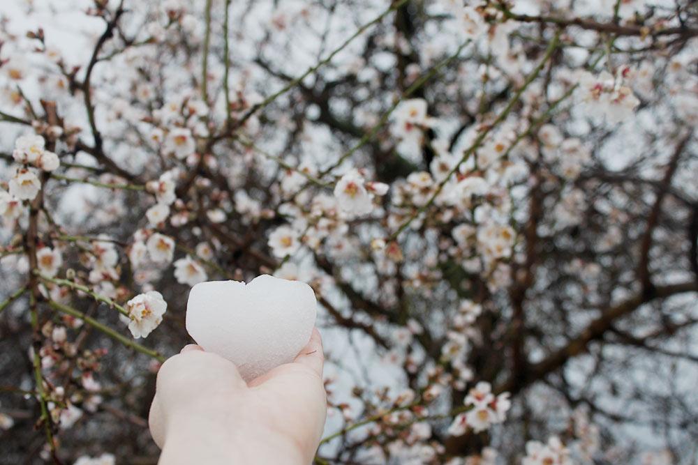 В конце февраля 2018года зацвели абрикосы и миндаль, и только тогда вдруг выпал первый за зиму снег