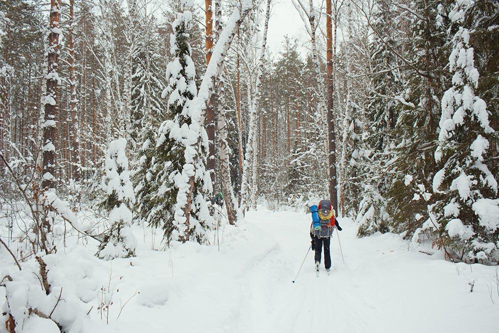 Зимний лес на юго-западе Гусь-Хрустального района Владимирской области, январь 2019года