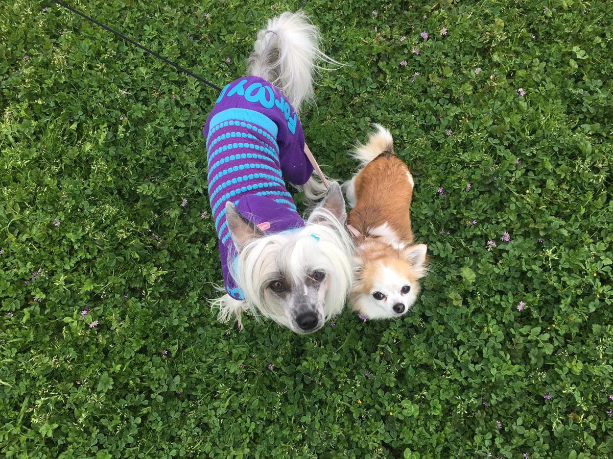 В месяц на содержание собак в Сан-Франциско мы тратим 420$
