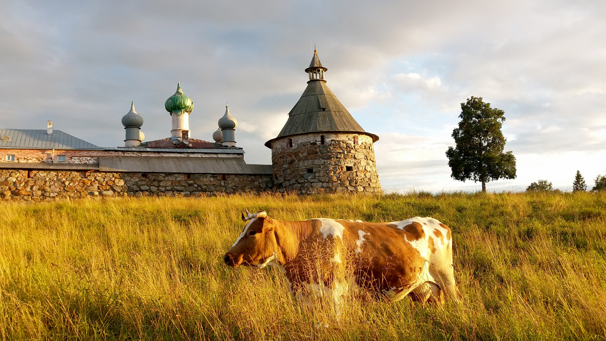 Как организовать поездку на Соловецкие острова