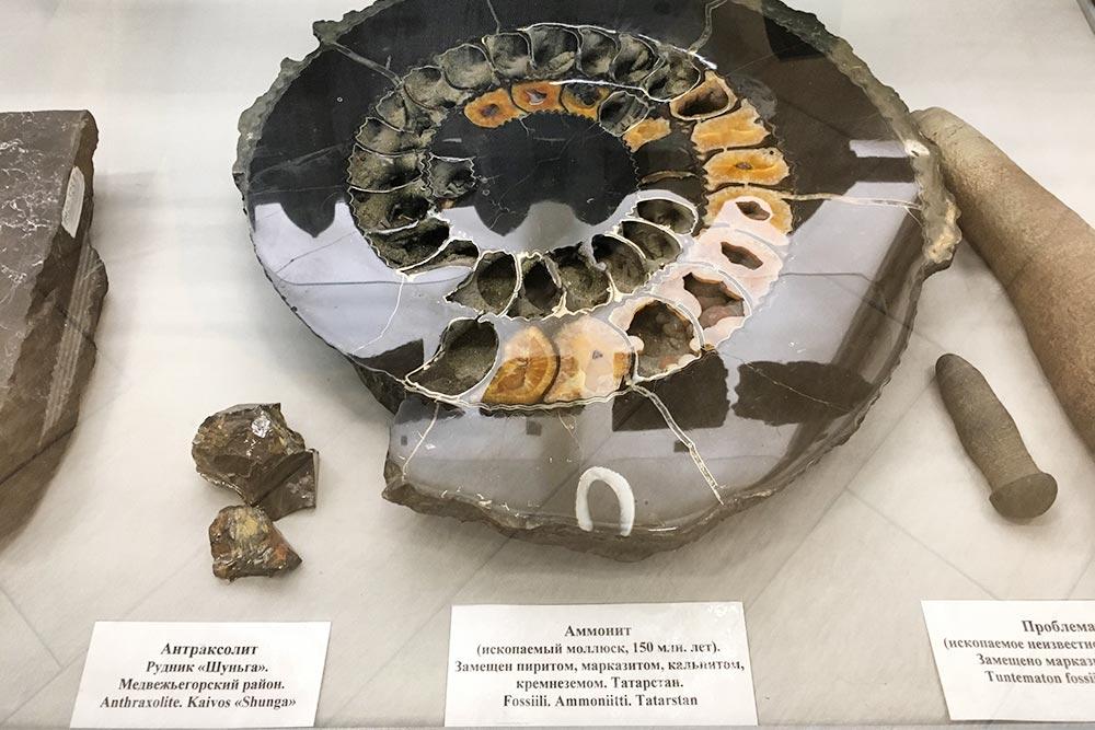 Вцентре— аммонит, ископаемый моллюск. Ему 150млн лет