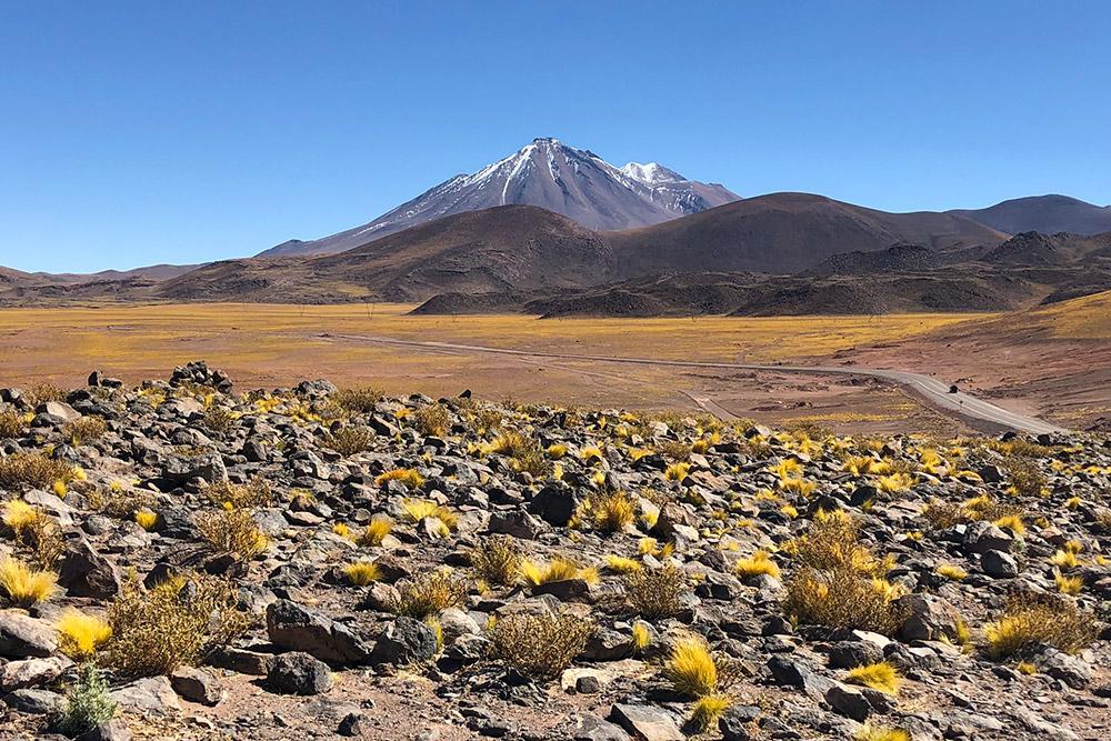 В разных местах пустыня Атакама выглядит по-разному. Песок, барханы и соляные поля сменяются огромными пространствами, покрытыми сотнями кактусов