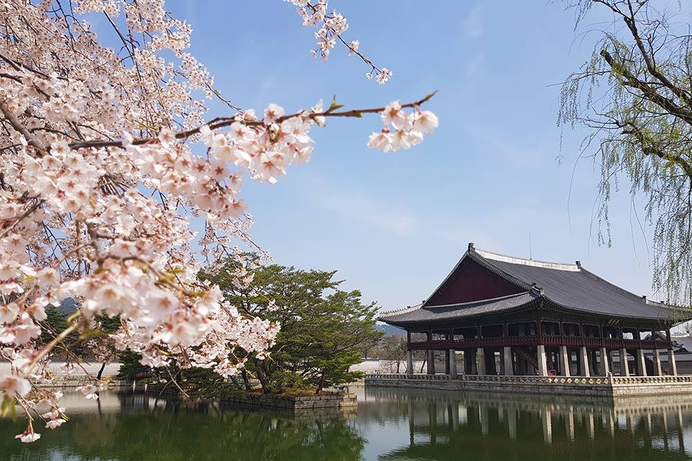 В Южной Корее мы посмотрели и цветение сакуры, и национальные парки, и мегаполисы