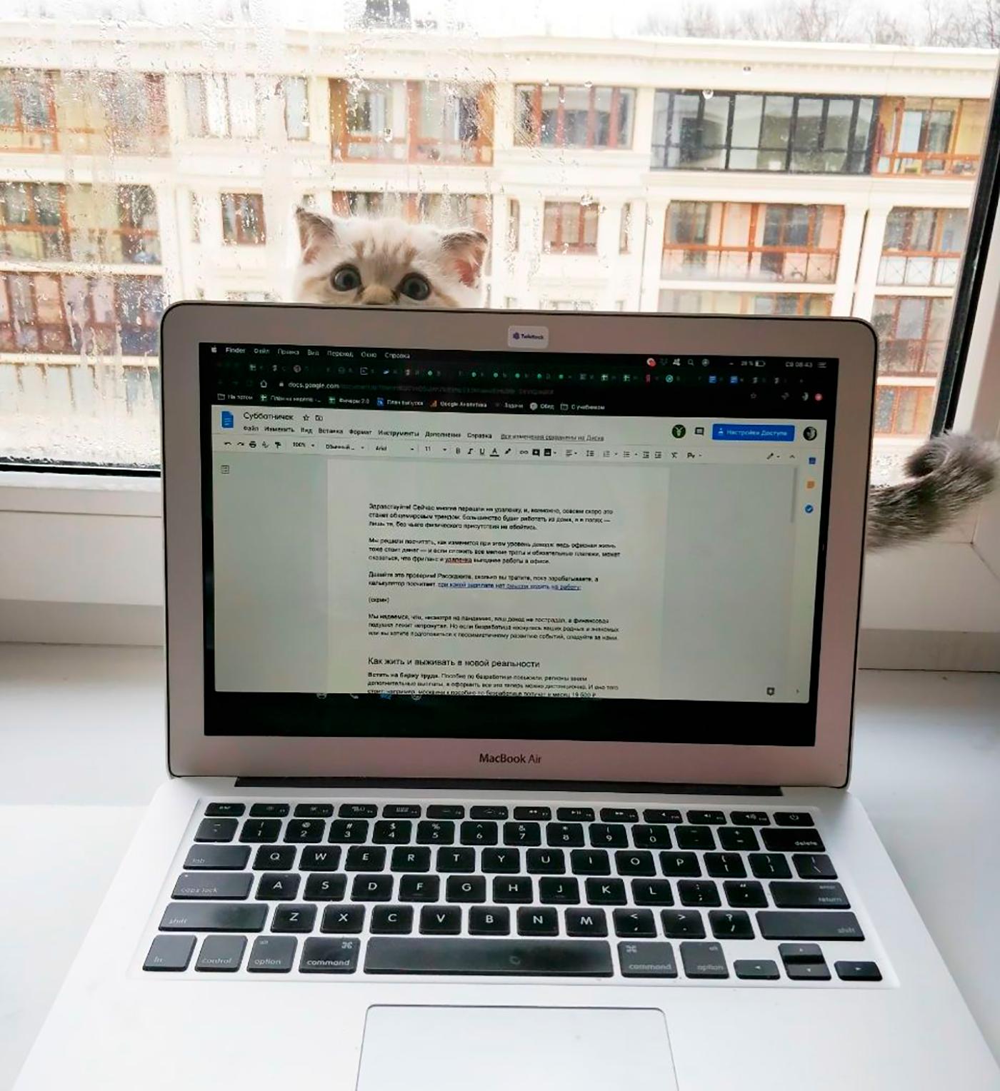 Если бы не котенок, кто знает, каким получилось бы это письмо