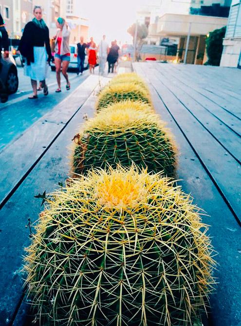 В Тель-Авиве повсюду растут такие ровные фотогеничные кактусы. Их не только помещают в кадки, но и просто встраивают в дорогу