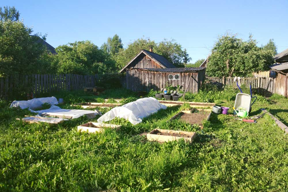А вот и наш игрушечный огородик. Сами отсебя неожидали, новедь посадили: капуста, картошка, морковь, свекла, разнообразная зелень, огурцы идаже пара кустов садовой земляники