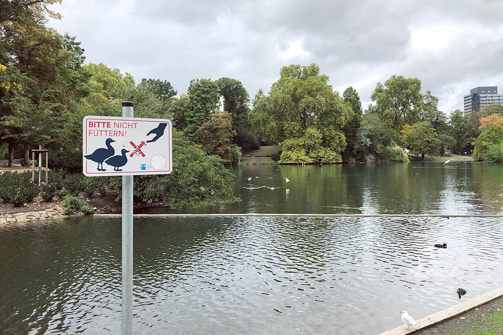 Надпись на табличке: «Пожалуйста, не кормите». Такие знаки стоят возле каждого водоема, гдеобитают птицы