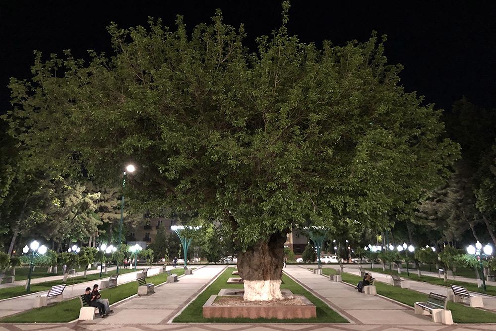 Вцентре Ташкента много ухоженных прогулочных аллей