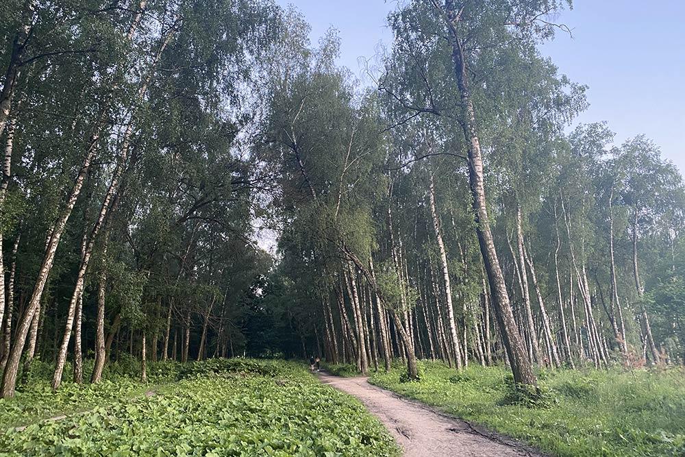 Если надоели люди и толпа, можно уйти в лес и погулять потропкам