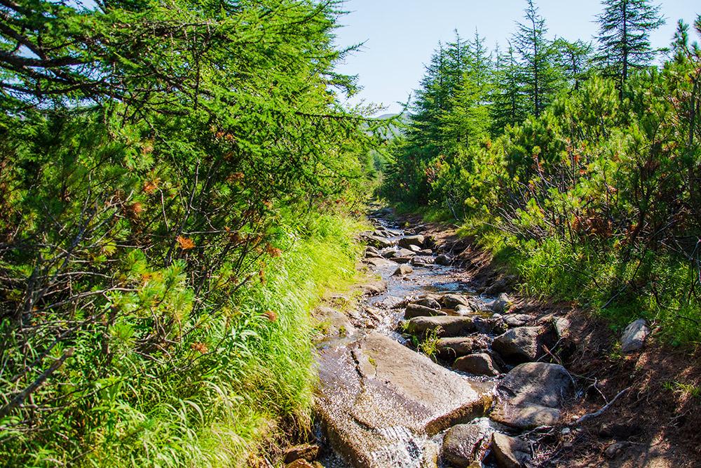 Горный ручей в тайге, по пути к бухте Батарейной в 10 км от города