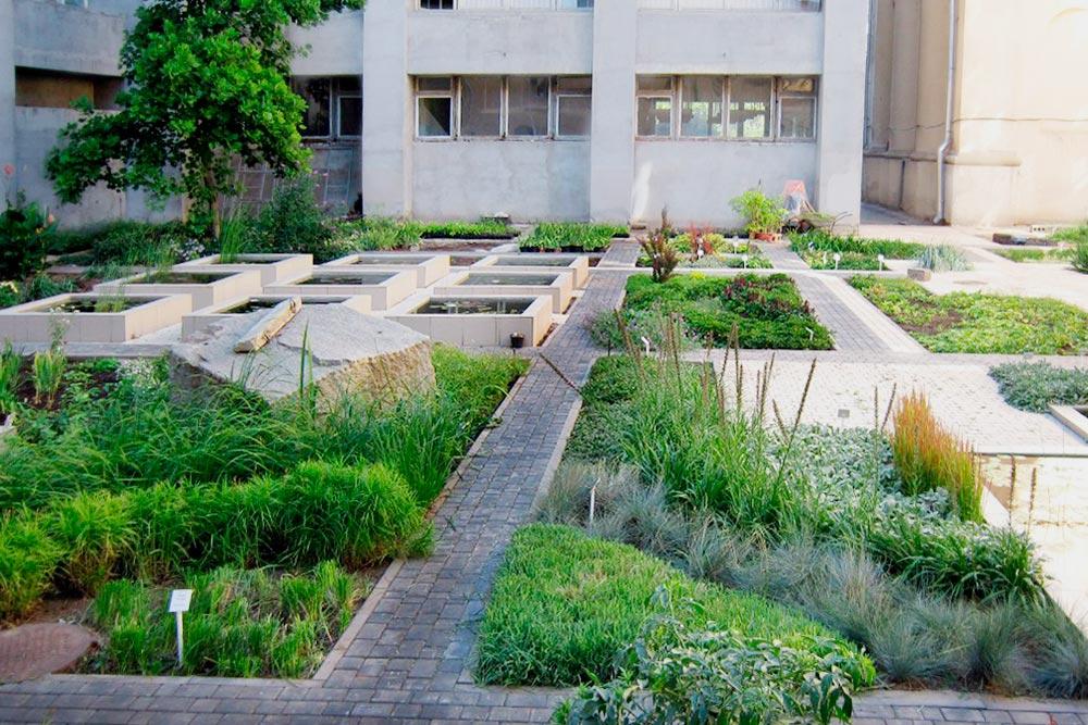 Волгоградский ботанический сад совсем небольшой, но и там можно приятно прогуляться. Фото: Ботанический сад ВГСПУ во «Вконтакте»