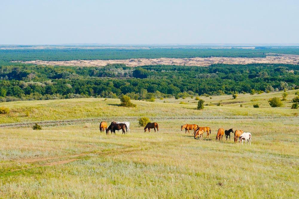 А это природный парк Нижнехоперский. Он расположен на территории трех районов Волгоградской области: Кумылженского, Алексеевского и Нехаевского. Фото Дарьи Чирковой