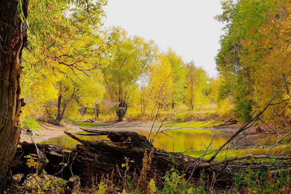Но красивые пейзажи есть и недалеко от города — на острове Сарпинский. Фото Дарьи Чирковой