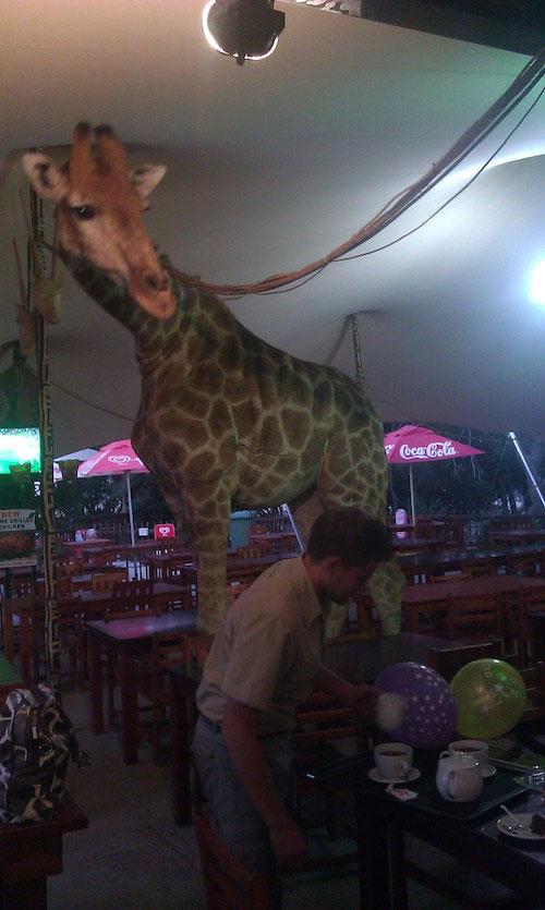 Кафе при львином парке, в котором мы завтракали и обедали. Сотрудники отмечают день рождения жирафа
