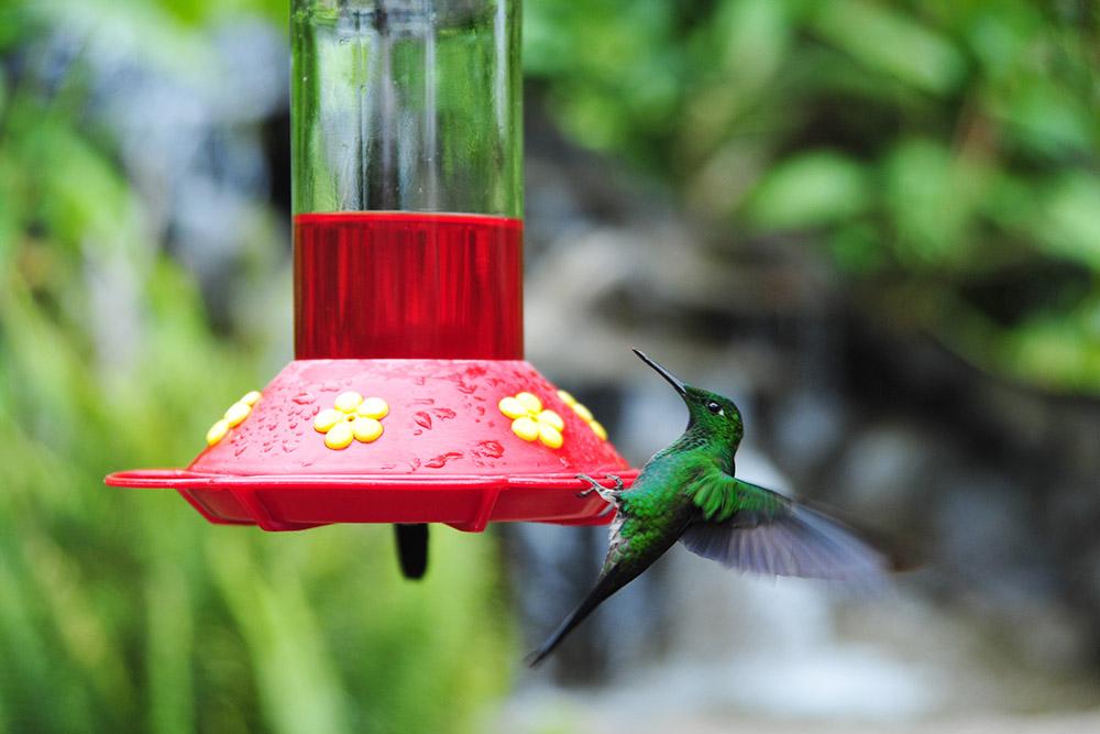 Колибри в парке приманивают с помощью нектара